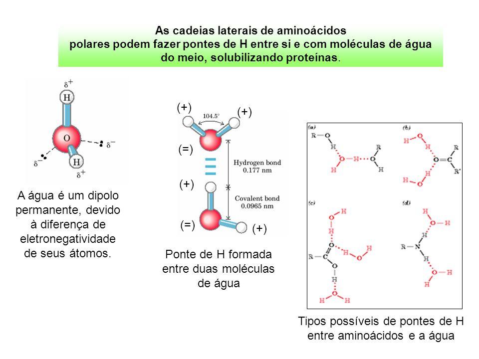 Tipos possíveis de pontes de H entre aminoácidos e a água Ponte de H formada entre duas moléculas de água (+) (=) (+) (=) (+) A água é um dipolo perma