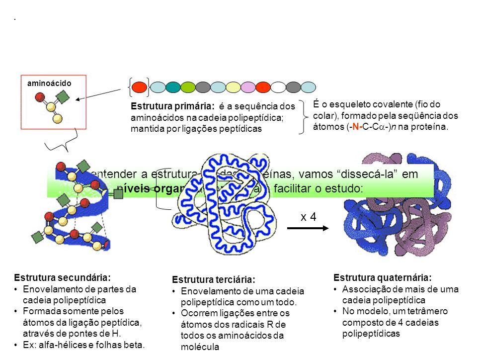 Estrutura quaternária: Associação de mais de uma cadeia polipeptídica No modelo, um tetrâmero composto de 4 cadeias polipeptídicas x 4 Para entender a