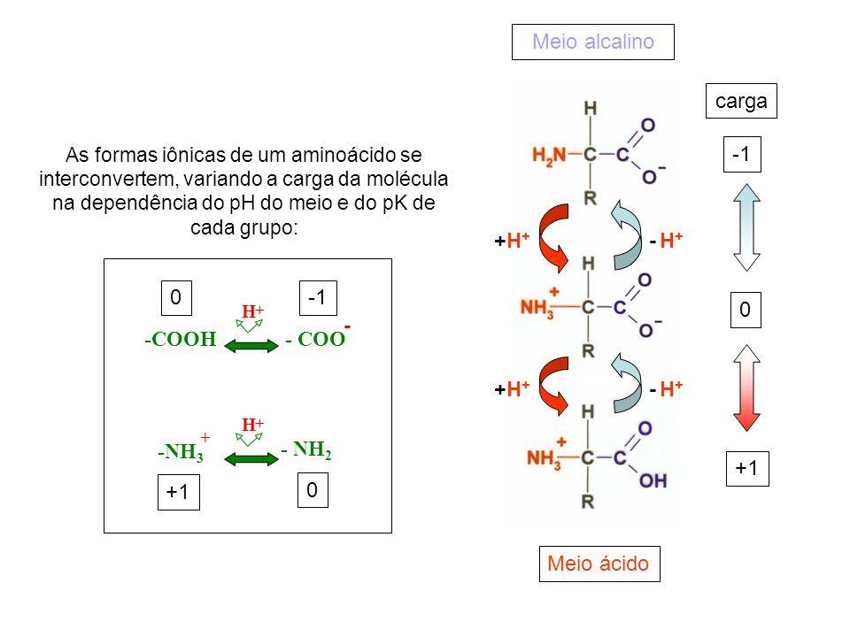 +H++H+ +H++H+ - H+- H+ - H+- H+ Meio alcalino Meio ácido As formas iônicas de um aminoácido se interconvertem, variando a carga da molécula na dependê
