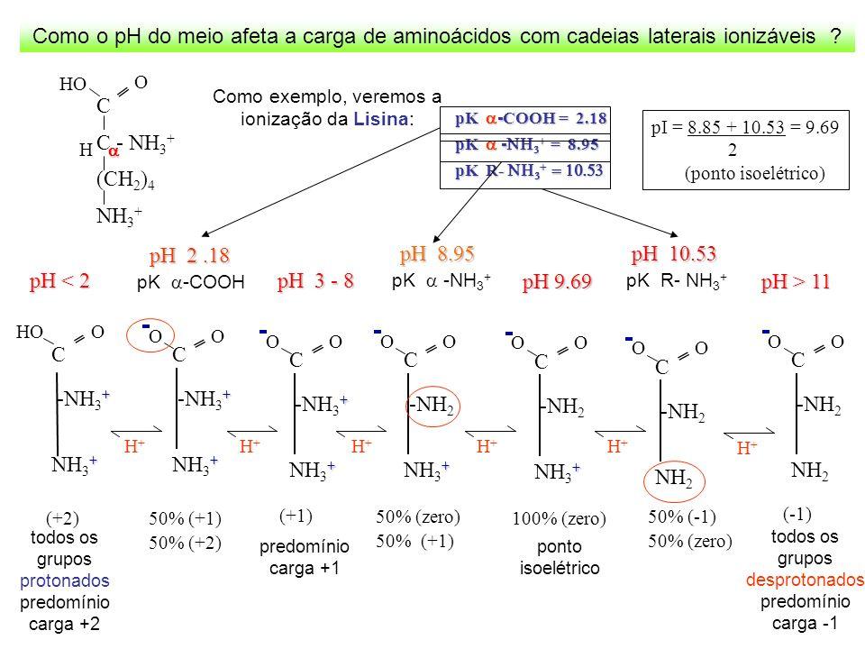 Como o pH do meio afeta a carga de aminoácidos com cadeias laterais ionizáveis ? Como exemplo, veremos a ionização da Lisina: O C C - NH 3 + (CH 2 ) 4