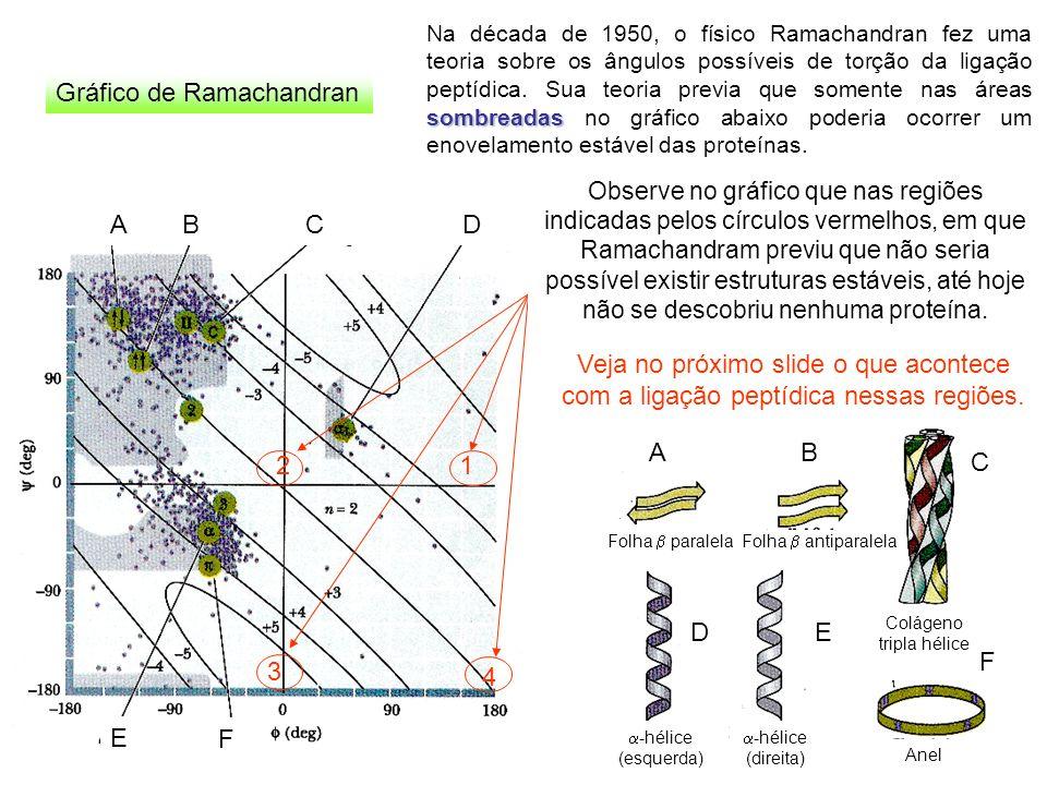 ABCD E F Gráfico de Ramachandran sombreadas Na década de 1950, o físico Ramachandran fez uma teoria sobre os ângulos possíveis de torção da ligação pe