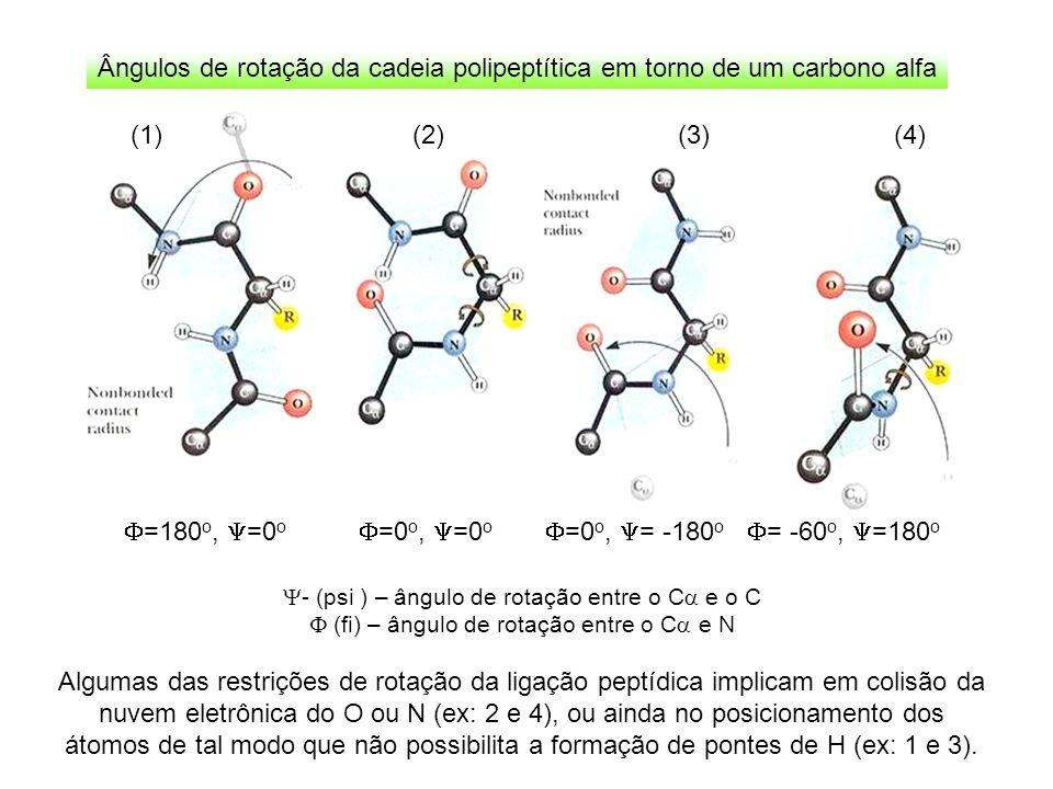 Ângulos de rotação da cadeia polipeptítica em torno de um carbono alfa Algumas das restrições de rotação da ligação peptídica implicam em colisão da n