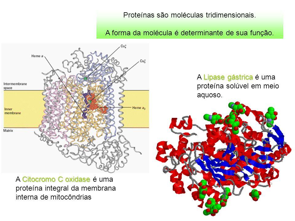 Para entender a relação estrutura X função de uma proteína, como exemplo veremos a mioglobina, proteína armazenadora de O 2 nos músculos dos mamíferos.