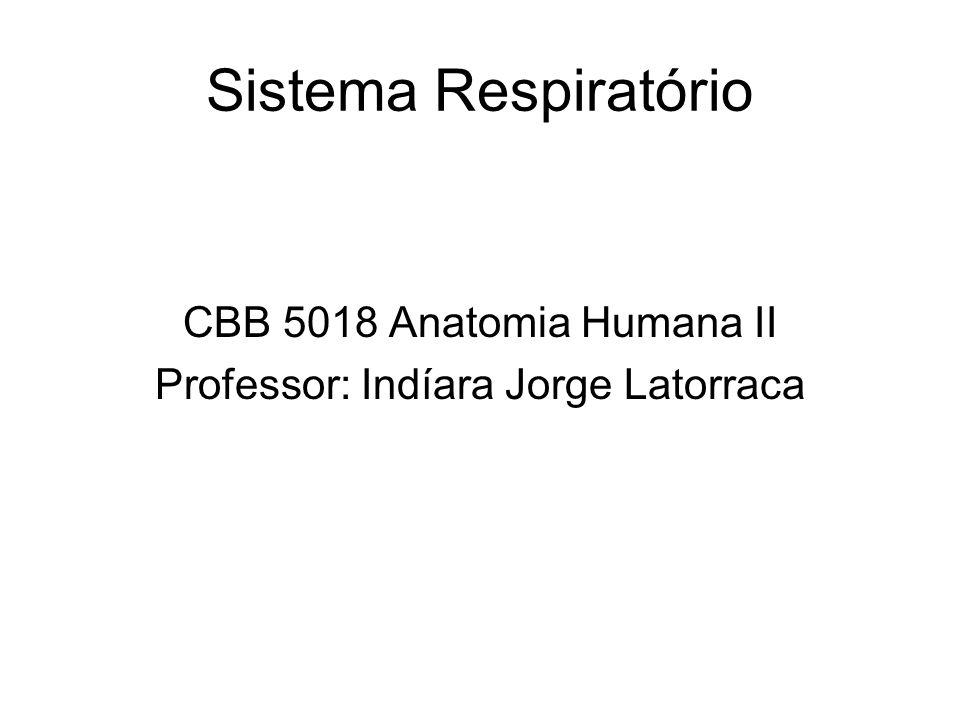 Sistema Respiratório CBB 5018 Anatomia Humana II Professor: Indíara Jorge Latorraca