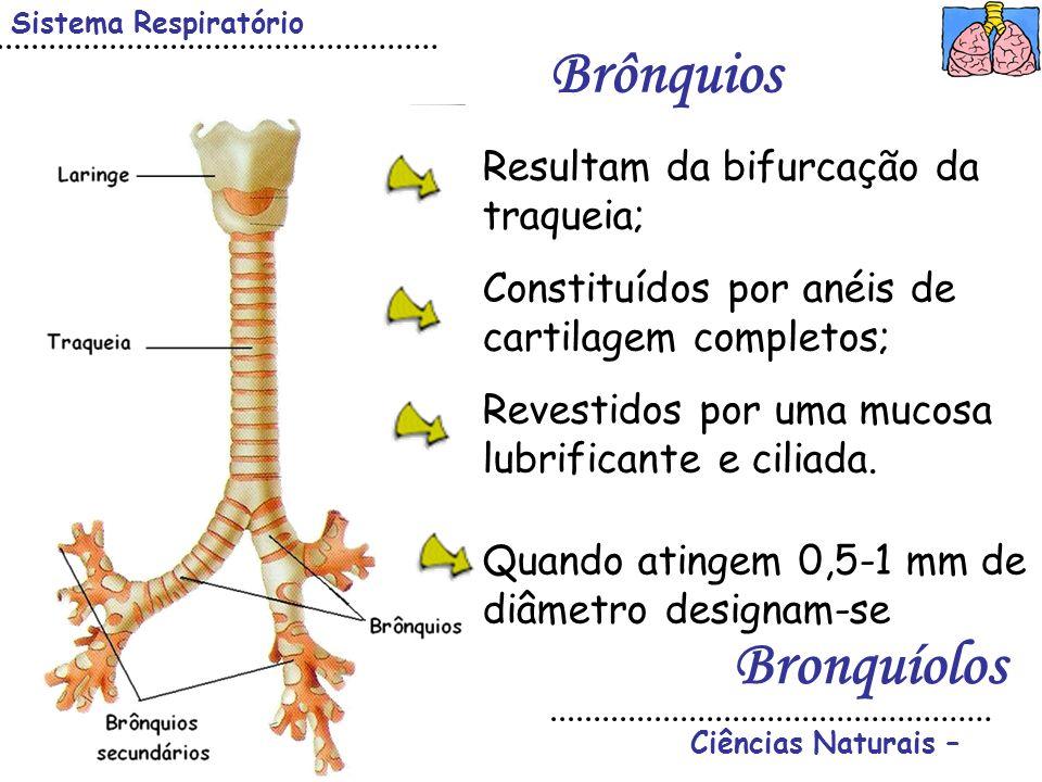 Ciências Naturais – Sistema Respiratório Brônquios Resultam da bifurcação da traqueia; Constituídos por anéis de cartilagem completos; Revestidos por