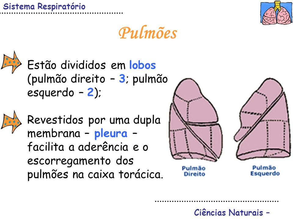 Sistema Respiratório Ciências Naturais – Pulmões Estão divididos em lobos (pulmão direito – 3; pulmão esquerdo – 2); Revestidos por uma dupla membrana