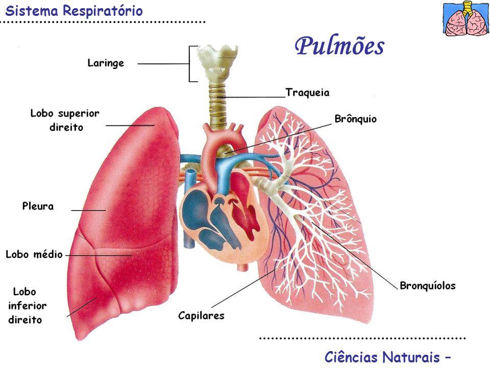Ciências Naturais – Sistema Respiratório Pulmões