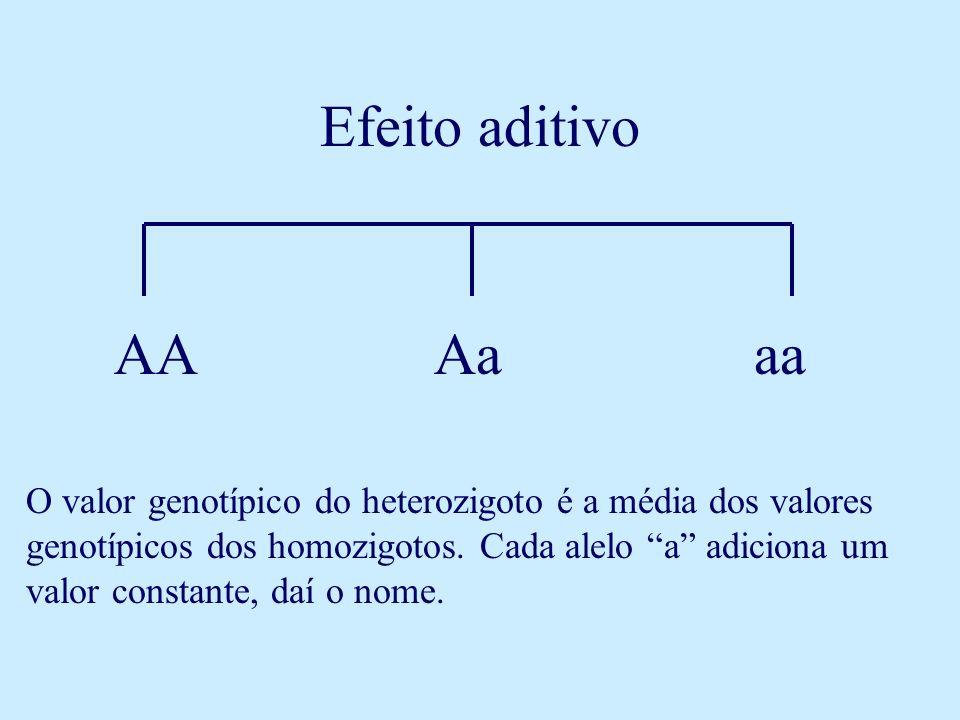 Efeito aditivo AAAaaa O valor genotípico do heterozigoto é a média dos valores genotípicos dos homozigotos. Cada alelo a adiciona um valor constante,