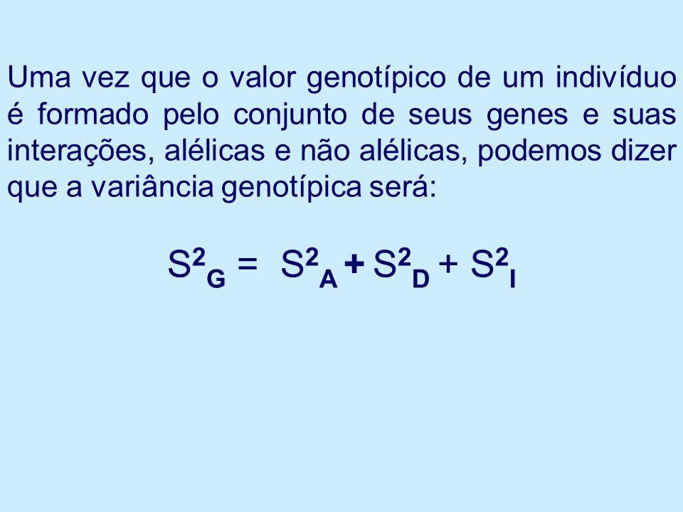 Uma vez que o valor genotípico de um indivíduo é formado pelo conjunto de seus genes e suas interações, alélicas e não alélicas, podemos dizer que a variância genotípica será: S 2 G = S 2 A + S 2 D + S 2 I