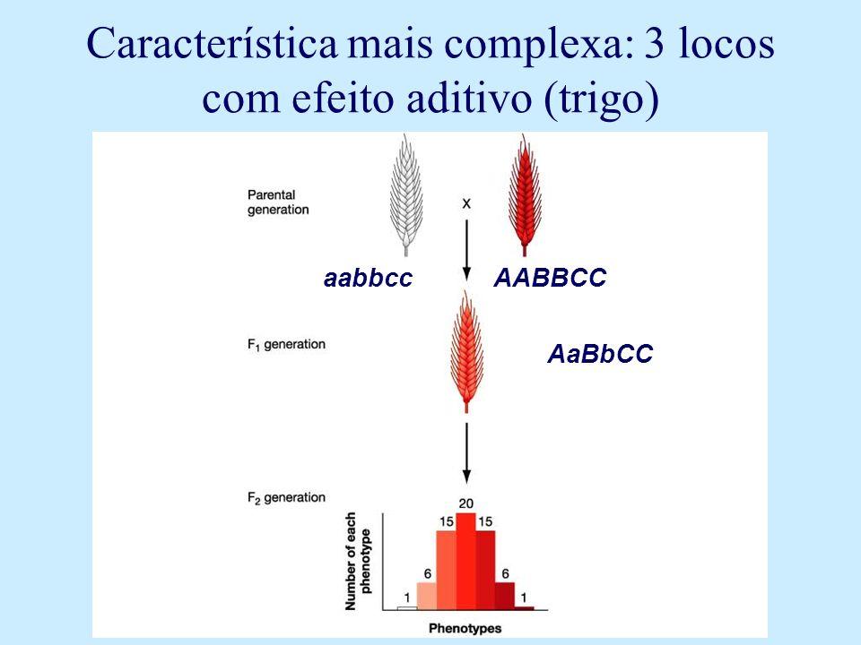 Característica mais complexa: 3 locos com efeito aditivo (trigo) aabbcc AABBCC AaBbCC