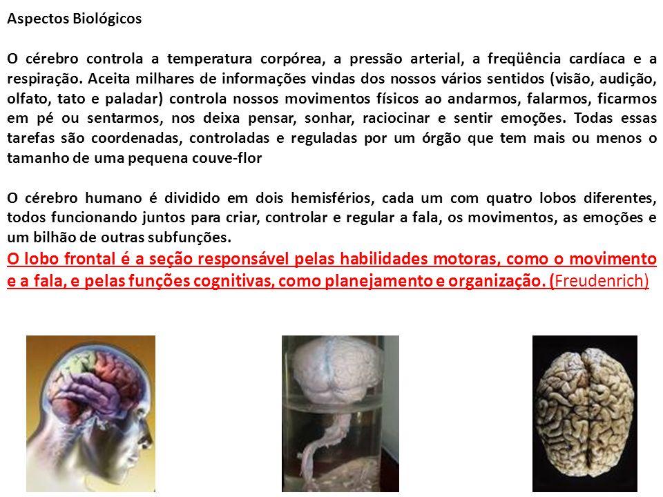 Aspectos Biológicos O cérebro controla a temperatura corpórea, a pressão arterial, a freqüência cardíaca e a respiração. Aceita milhares de informaçõe
