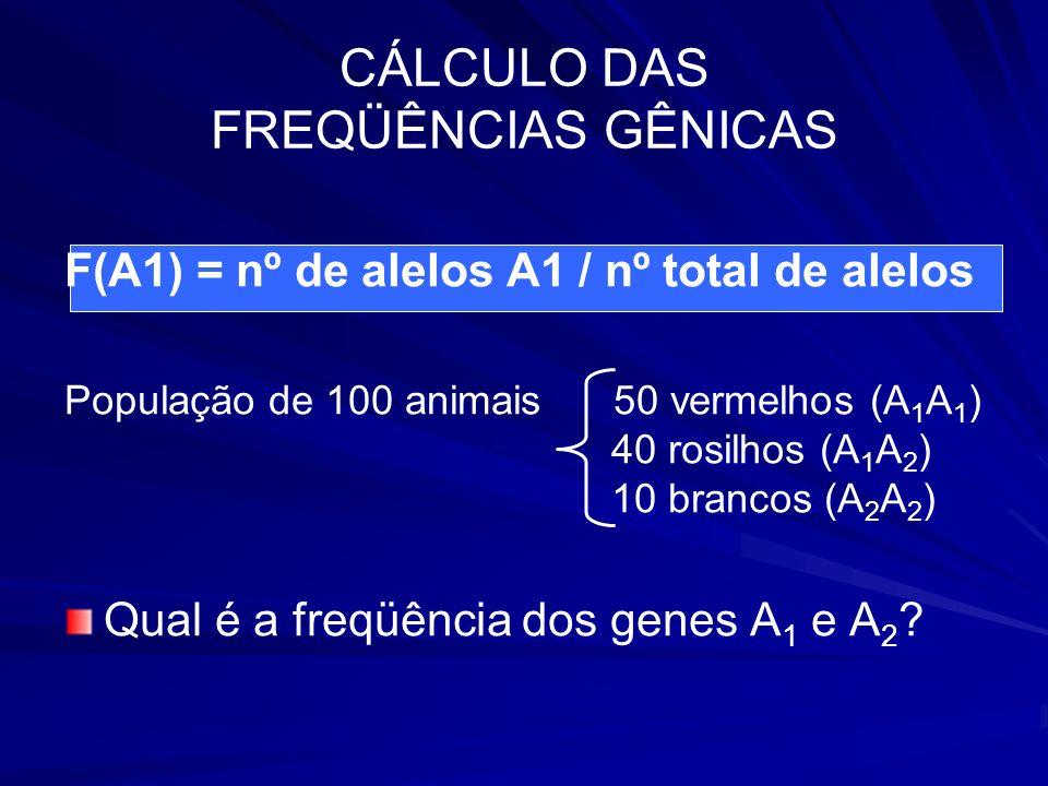 CÁLCULO DAS FREQÜÊNCIAS GÊNICAS F(A1) = nº de alelos A1 / nº total de alelos População de 100 animais 50 vermelhos (A 1 A 1 ) 40 rosilhos (A 1 A 2 ) 1