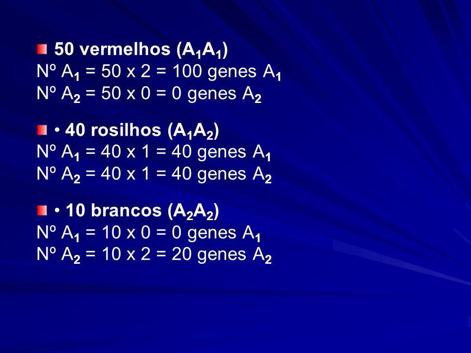 50 vermelhos (A 1 A 1 ) Nº A 1 = 50 x 2 = 100 genes A 1 Nº A 2 = 50 x 0 = 0 genes A 2 40 rosilhos (A 1 A 2 ) Nº A 1 = 40 x 1 = 40 genes A 1 Nº A 2 = 4