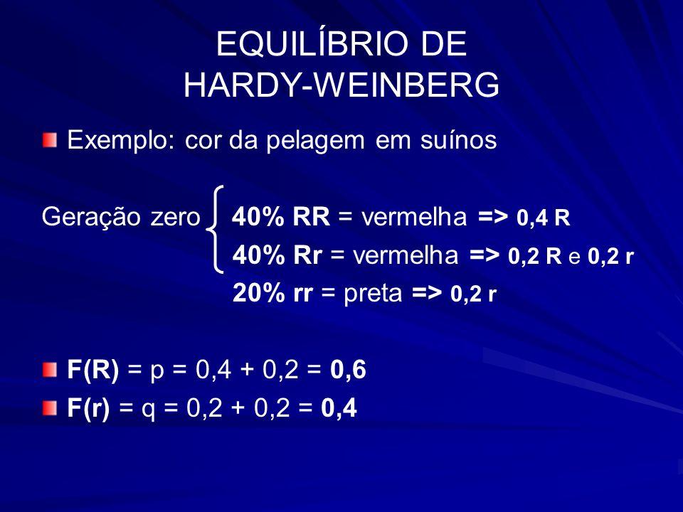 EQUILÍBRIO DE HARDY-WEINBERG Exemplo: cor da pelagem em suínos Geração zero 40% RR = vermelha => 0,4 R 40% Rr = vermelha => 0,2 R e 0,2 r 20% rr = pre