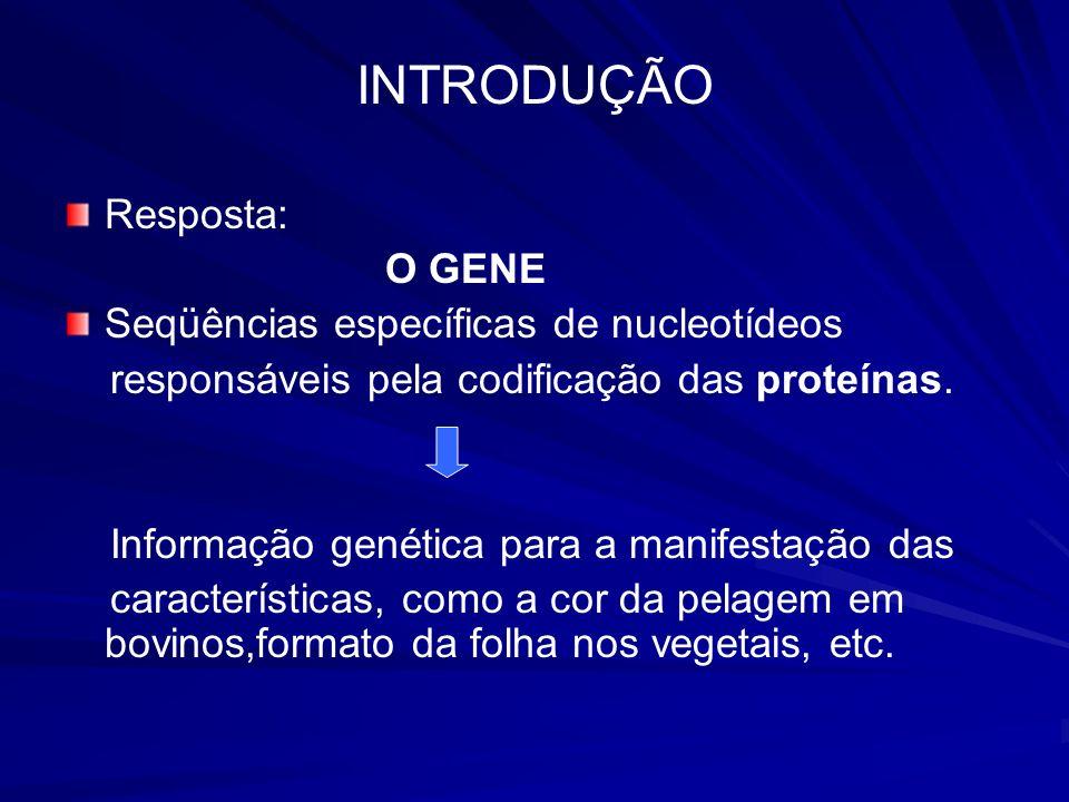 INTRODUÇÃO Resposta: O GENE Seqüências específicas de nucleotídeos responsáveis pela codificação das proteínas. Informação genética para a manifestaçã
