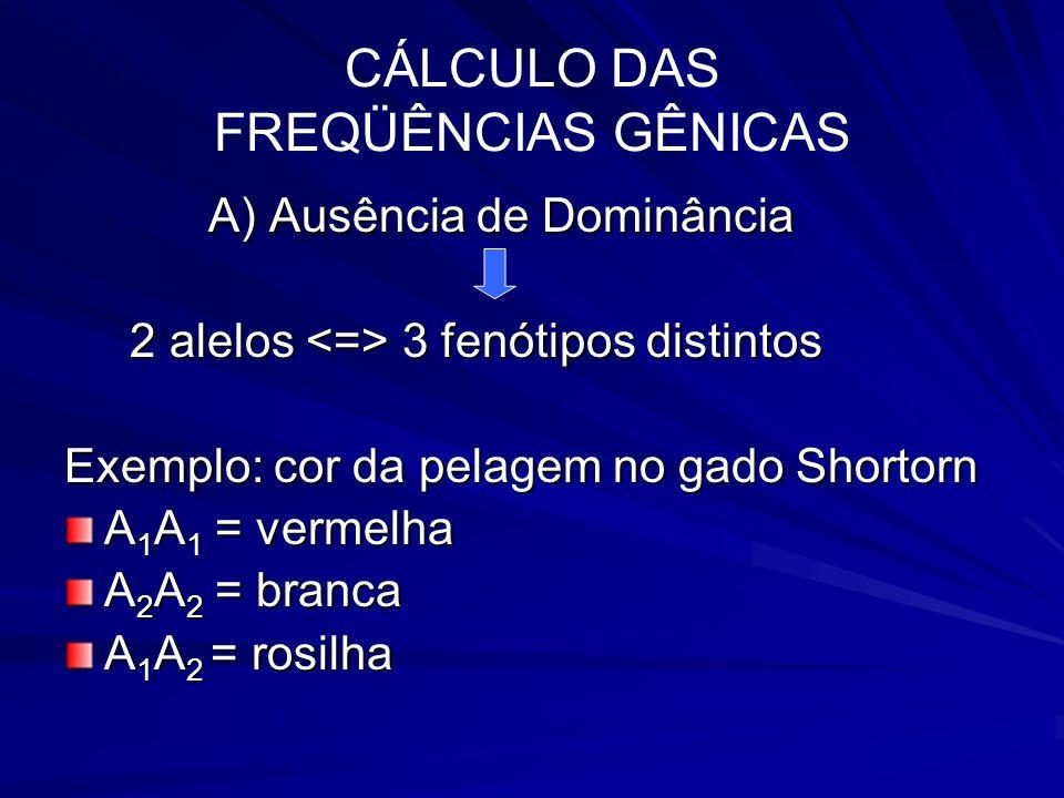 CÁLCULO DAS FREQÜÊNCIAS GÊNICAS F(A1) = nº de alelos A1 / nº total de alelos População de 100 animais 50 vermelhos (A 1 A 1 ) 40 rosilhos (A 1 A 2 ) 10 brancos (A 2 A 2 ) Qual é a freqüência dos genes A 1 e A 2 ?