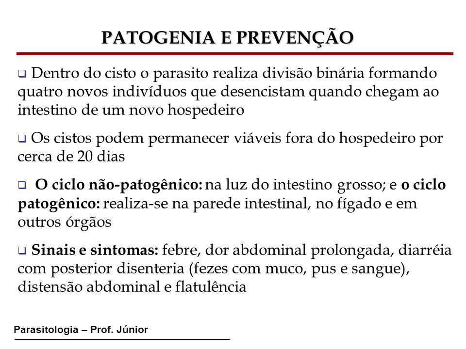 Parasitologia – Prof. Júnior Dentro do cisto o parasito realiza divisão binária formando quatro novos indivíduos que desencistam quando chegam ao inte