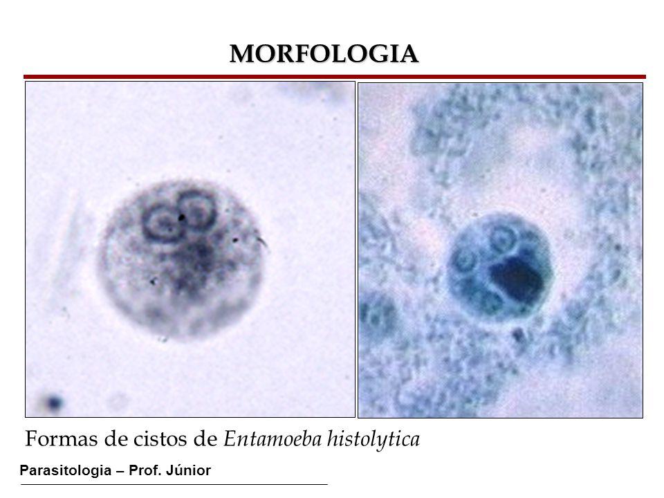 Parasitologia – Prof. Júnior MORFOLOGIA Formas de cistos de Entamoeba histolytica