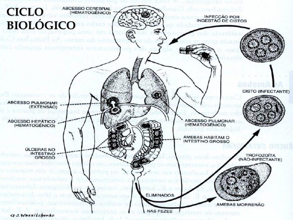 CICLOBIOLÓGICO