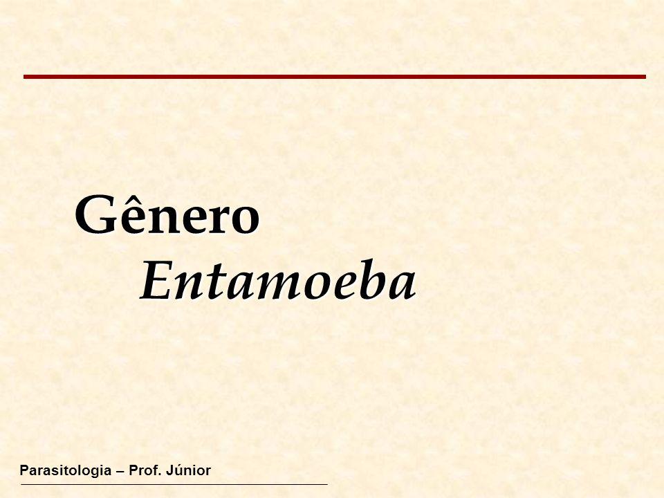 GêneroEntamoeba