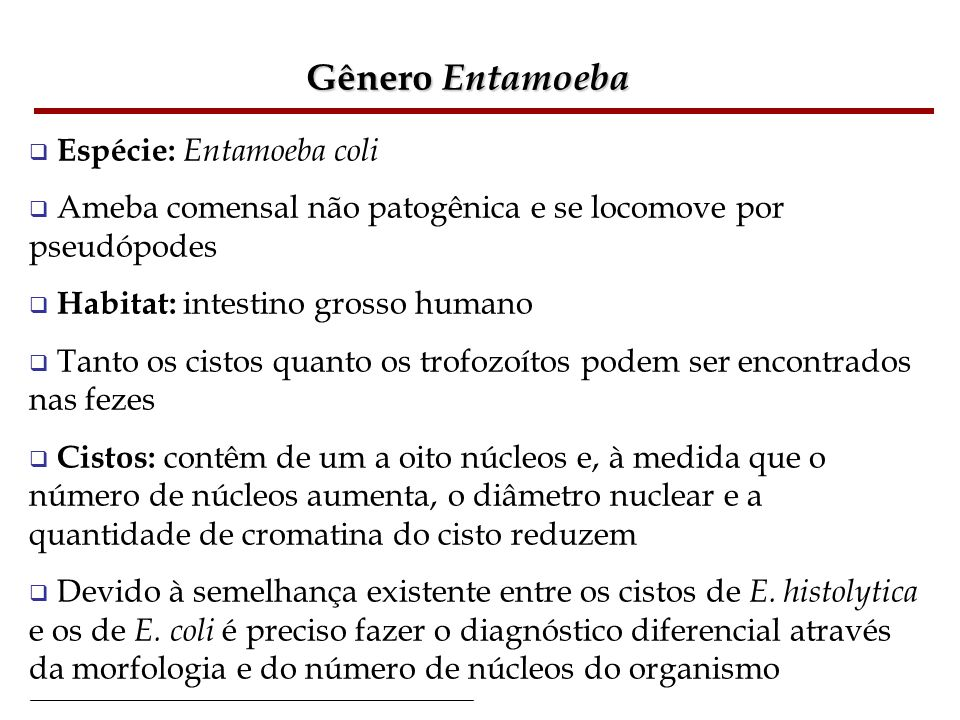 Gênero Entamoeba Espécie: Entamoeba coli Ameba comensal não patogênica e se locomove por pseudópodes Habitat: intestino grosso humano Tanto os cistos