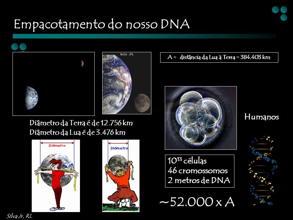 Silva Jr, RL Diâmetro da Terra é de 12.756 km A = distância da Lua à Terra = 384.403 km Diâmetro da Lua é de 3.476 km Humanos 10 13 células 46 cromossomos 2 metros de DNA ~52.000 x A Empacotamento do nosso DNA