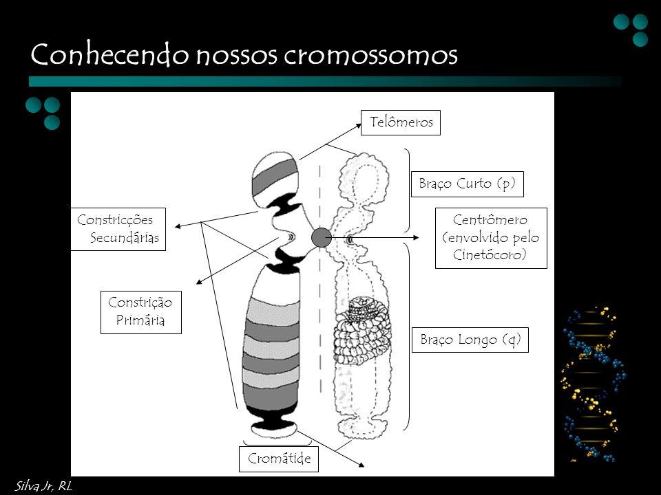 Silva Jr, RL Cromátide Braço Curto (p) Braço Longo (q) Centrômero (envolvido pelo Cinetócoro) Telômeros Constricções Secundárias Constrição Primária Conhecendo nossos cromossomos