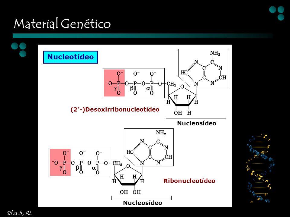 Silva Jr, RL Nucleotídeo Nucleosídeo Nucleosídeo (2-)Desoxirribonucleotídeo Ribonucleotídeo Material Genético