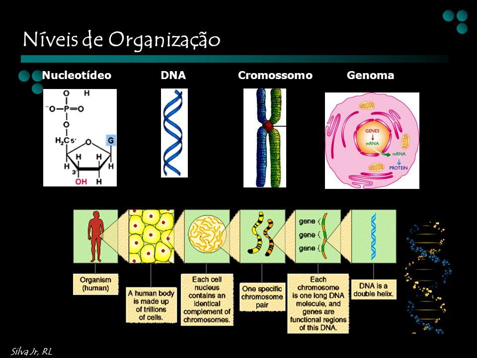 Silva Jr, RL NucleotídeoDNACromossomoGenoma Níveis de Organização