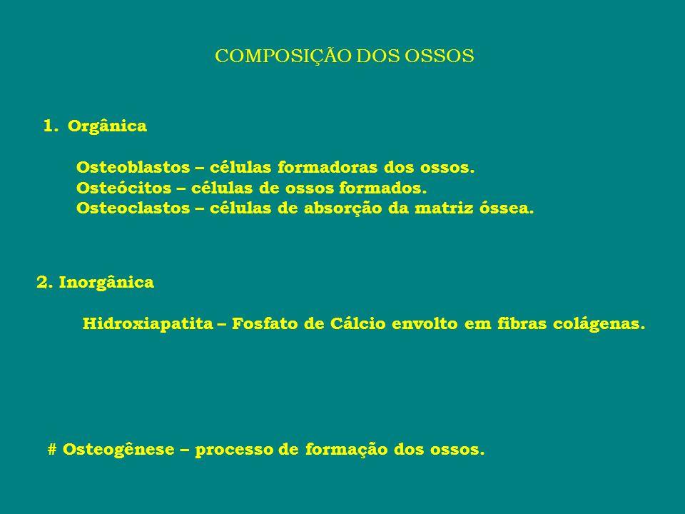 COMPOSIÇÃO DOS OSSOS 1.Orgânica Osteoblastos – células formadoras dos ossos. Osteócitos – células de ossos formados. Osteoclastos – células de absorçã