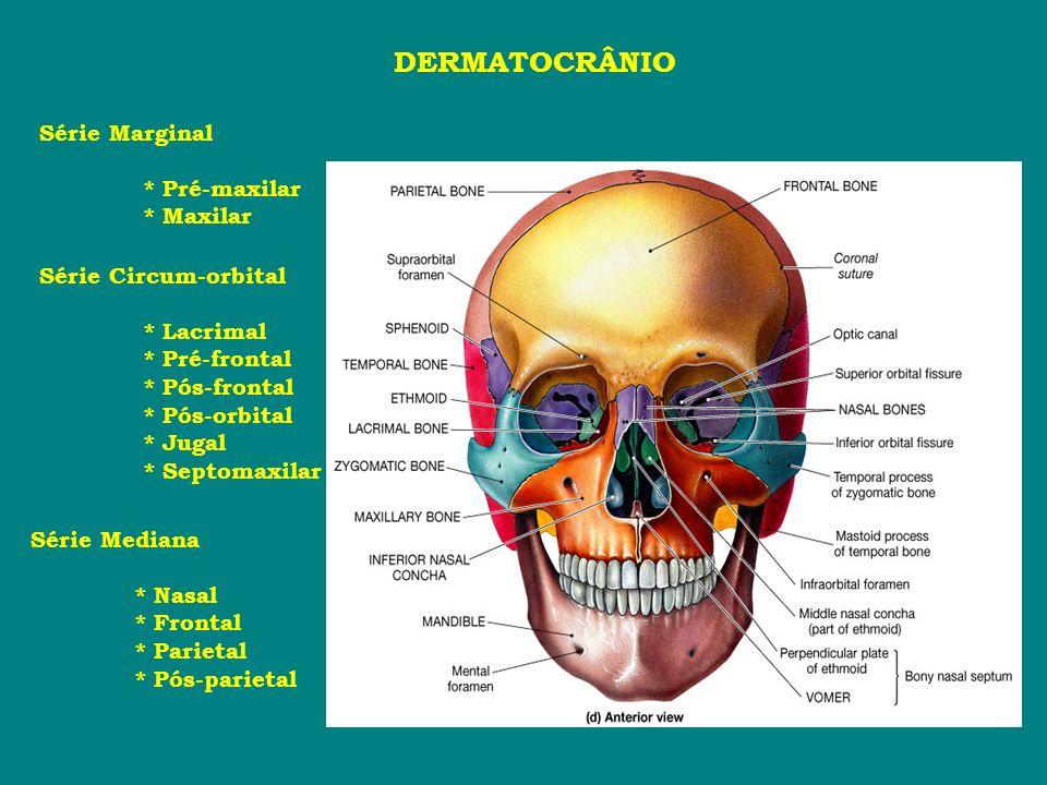 DERMATOCRÂNIO Série Marginal * Pré-maxilar * Maxilar Série Circum-orbital * Lacrimal * Pré-frontal * Pós-frontal * Pós-orbital * Jugal * Septomaxilar