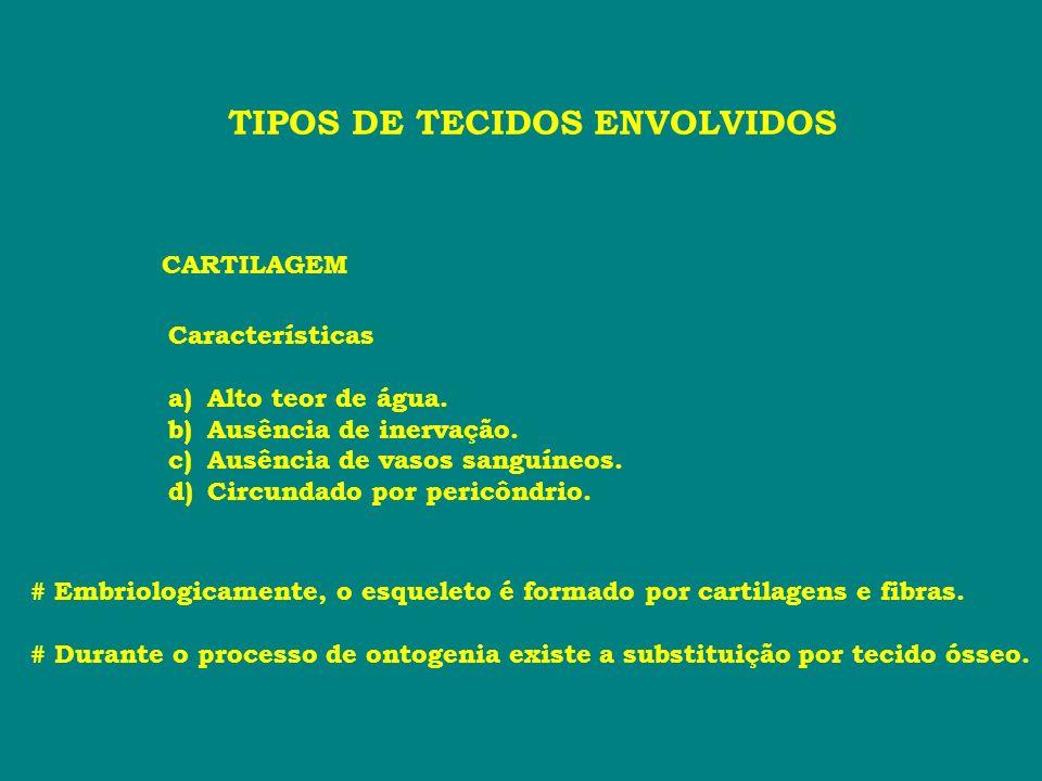 PÉS Regiões Tarso Forma a articulação do tornozelo (com a Tíbia e a Fíbula).