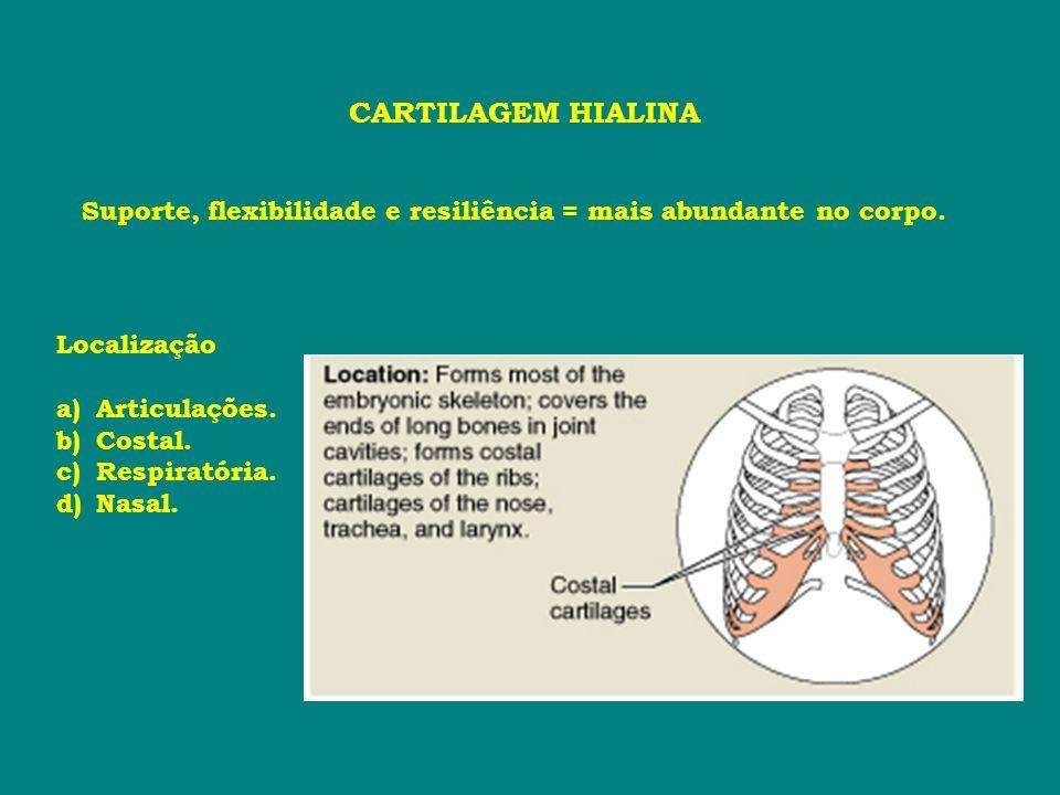 CARTILAGEM HIALINA Suporte, flexibilidade e resiliência = mais abundante no corpo. Localização a)Articulações. b)Costal. c)Respiratória. d)Nasal.