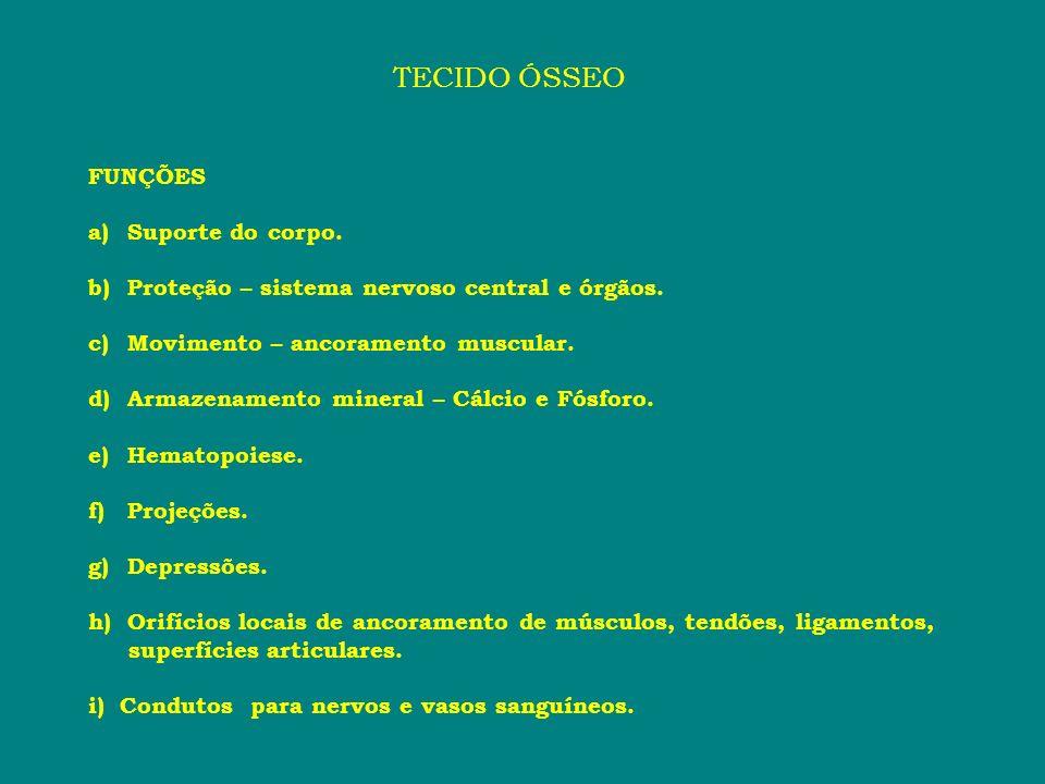 Série Palatina * Vômer * Palatino * Ectopterigóide * Pterigóide * Paraesfenóide