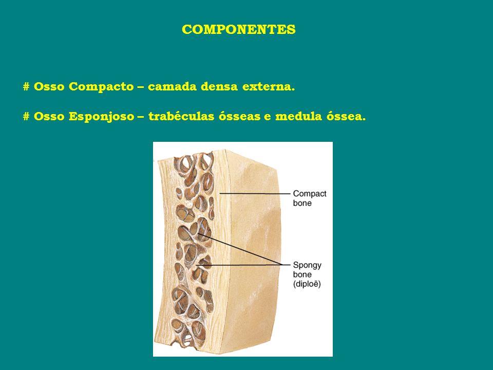 COMPONENTES # Osso Compacto – camada densa externa. # Osso Esponjoso – trabéculas ósseas e medula óssea.