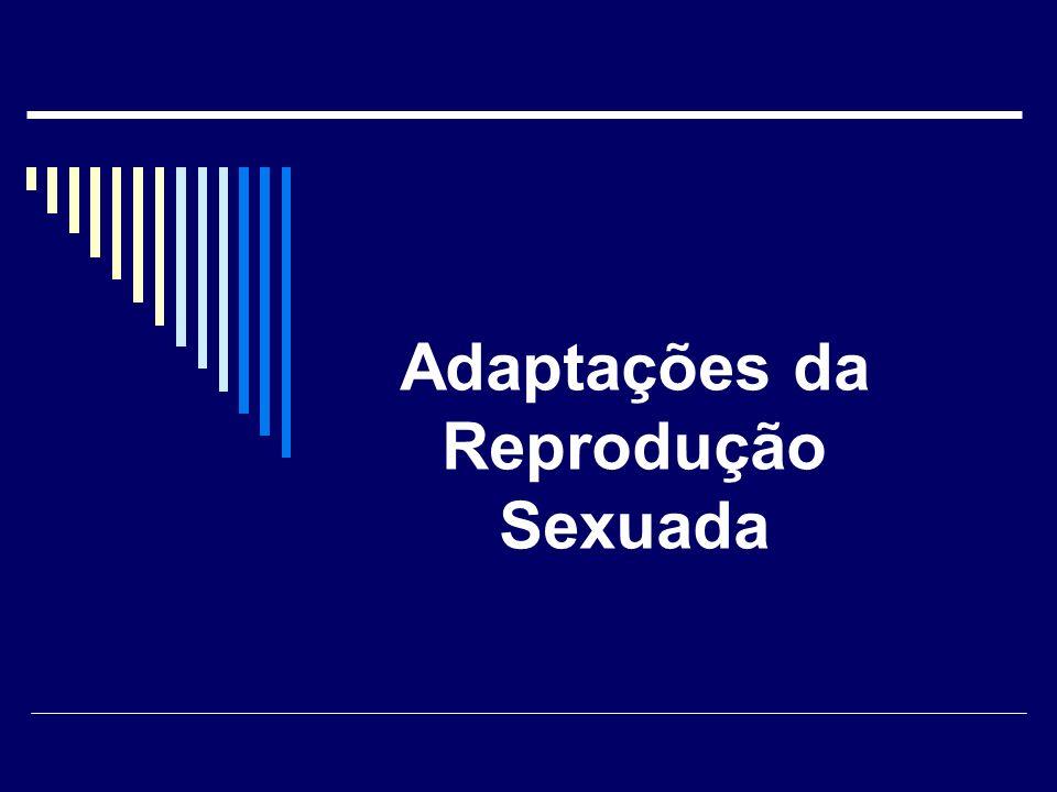 EVOLUÇÃO Prof. Eric Santos Araujo 22-10-2009 SELEÇÃO SEXUAL