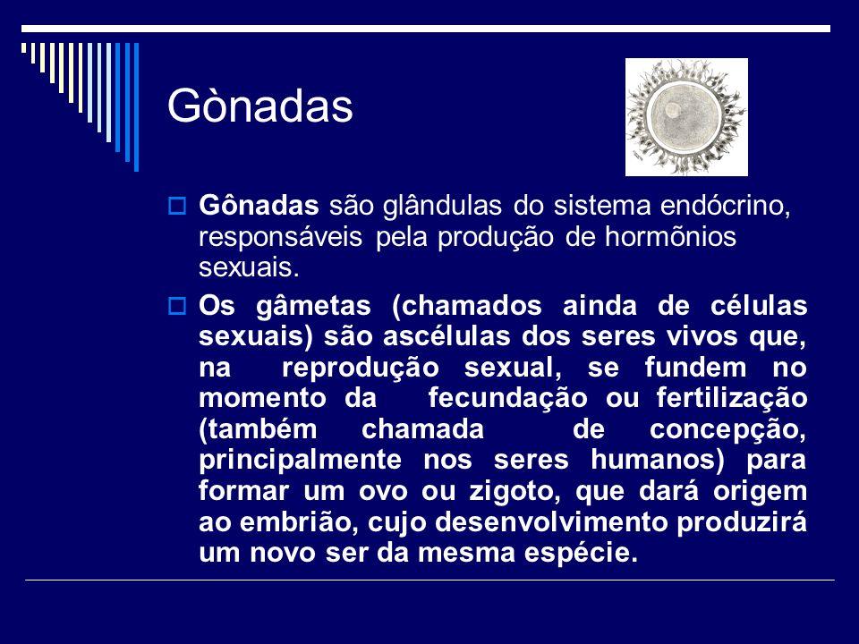 Gònadas Gônadas são glândulas do sistema endócrino, responsáveis pela produção de hormõnios sexuais.