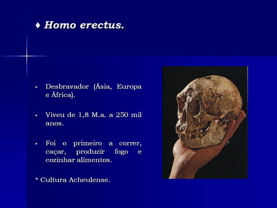 Homo erectus. Homo erectus. Desbravador (Ásia, Europa e África). Desbravador (Ásia, Europa e África). Viveu de 1,8 M.a. a 250 mil anos. Viveu de 1,8 M