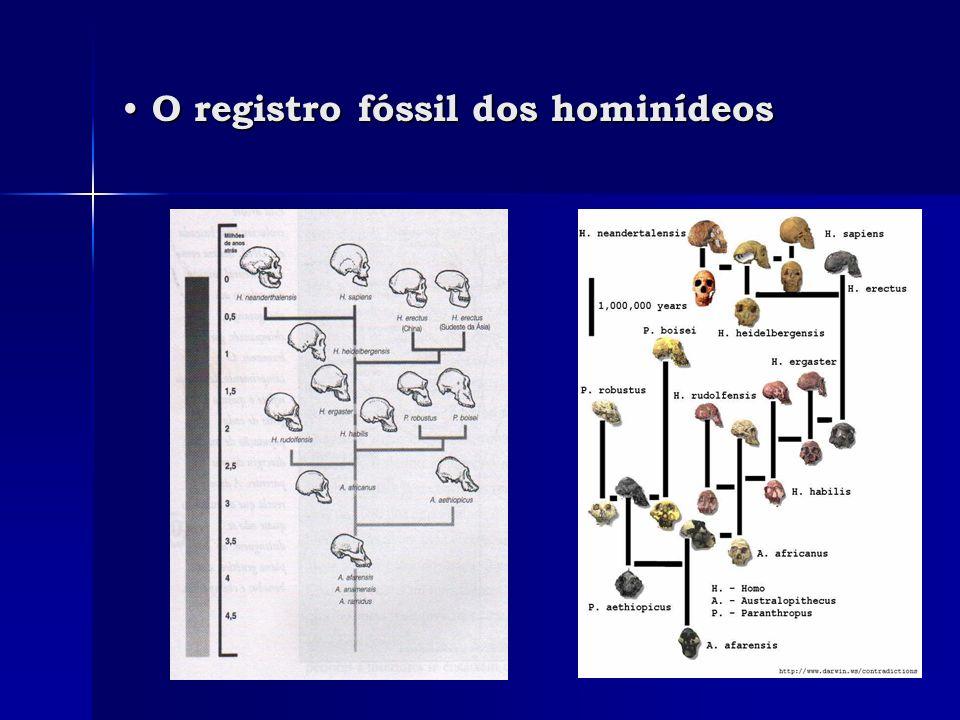 Sahelanthropus tchadensis Sahelanthropus tchadensis Apelidado de Toumai (19 de julho de 2001).