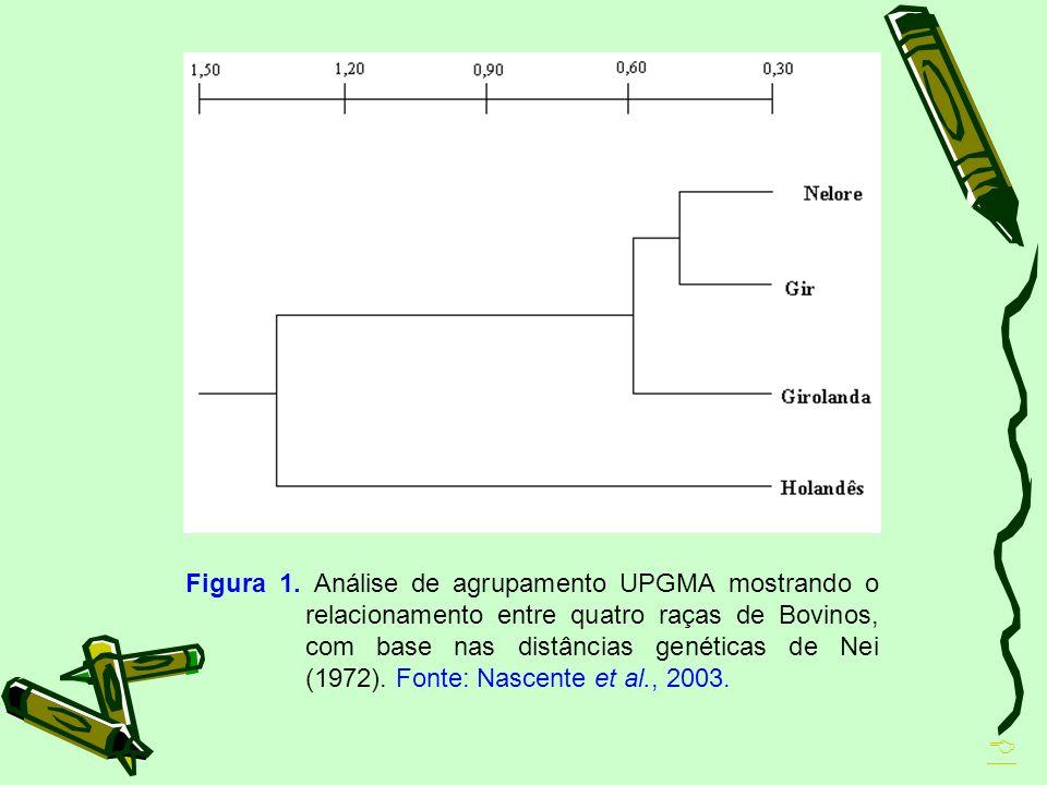 Figura 1. Análise de agrupamento UPGMA mostrando o relacionamento entre quatro raças de Bovinos, com base nas distâncias genéticas de Nei (1972). Font