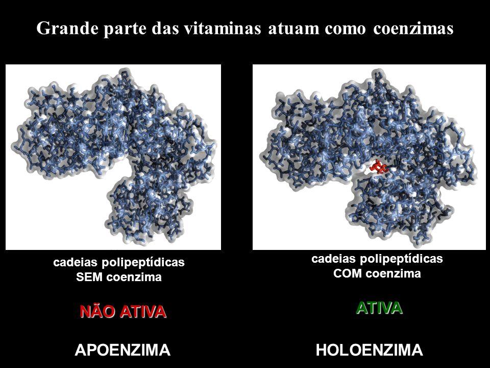 Grande parte das vitaminas atuam como coenzimas cadeias polipeptídicas SEM coenzima cadeias polipeptídicas COM coenzima NÃO ATIVA ATIVA APOENZIMAHOLOE