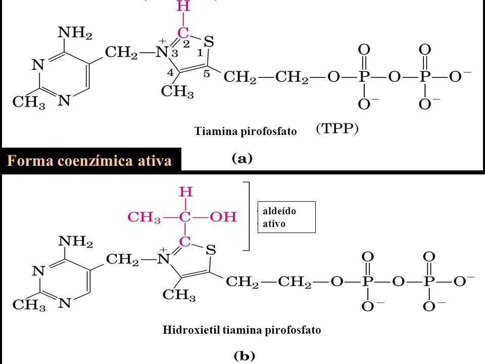 Tiamina pirofosfato Forma coenzímica ativa Hidroxietil tiamina pirofosfato aldeído ativo