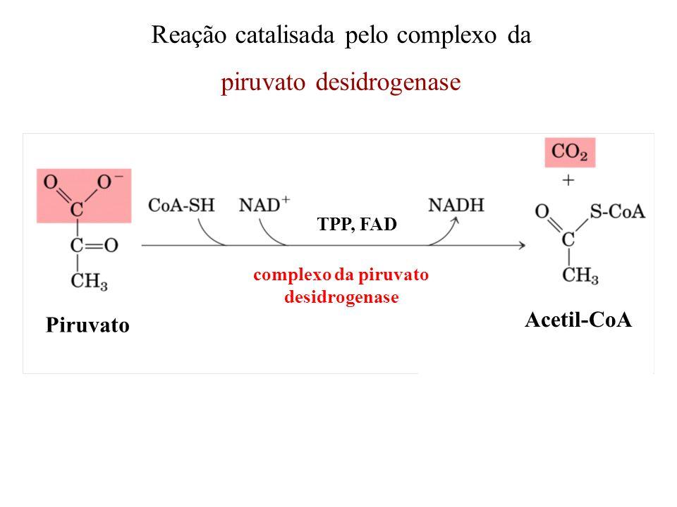 Reação catalisada pelo complexo da piruvato desidrogenase Piruvato TPP, FAD Acetil-CoA complexo da piruvato desidrogenase