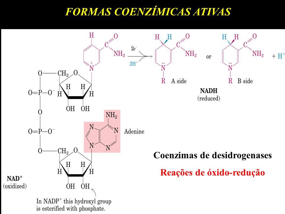 FORMAS COENZÍMICAS ATIVAS Coenzimas de desidrogenases Reações de óxido-redução