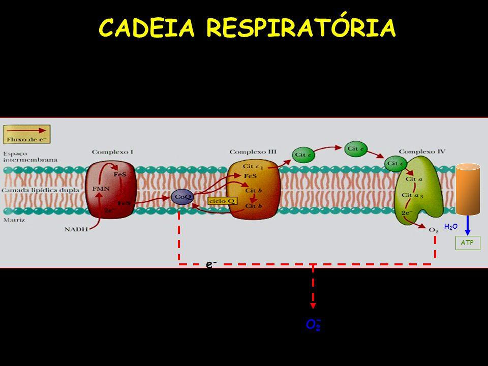 CADEIA RESPIRATÓRIA e-e- O2O2 - ATP H2OH2O