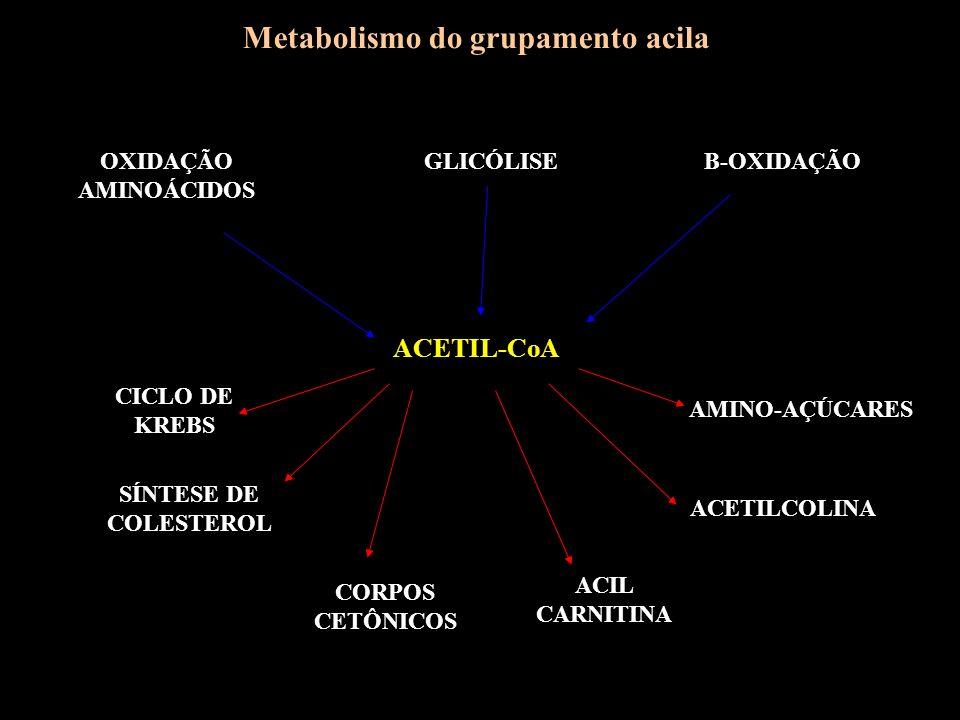 Metabolismo do grupamento acila ACETIL-CoA GLICÓLISEB-OXIDAÇÃOOXIDAÇÃO AMINOÁCIDOS CICLO DE KREBS SÍNTESE DE COLESTEROL CORPOS CETÔNICOS ACIL CARNITIN