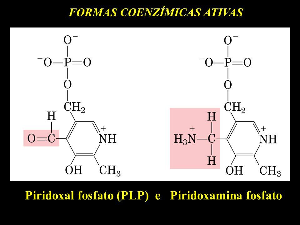 FORMAS COENZÍMICAS ATIVAS Piridoxal fosfato (PLP) e Piridoxamina fosfato