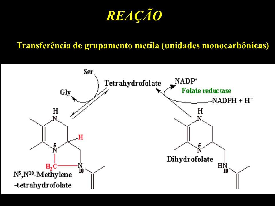 REAÇÃO Transferência de grupamento metila (unidades monocarbônicas)