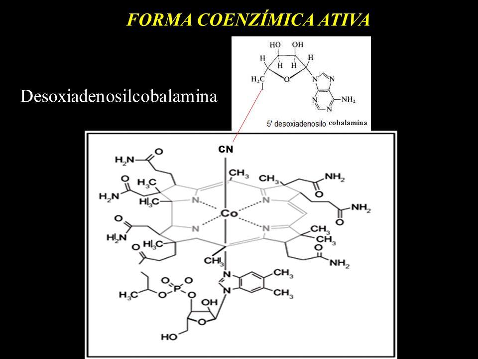 FORMA COENZÍMICA ATIVA cobalamina CN Desoxiadenosilcobalamina