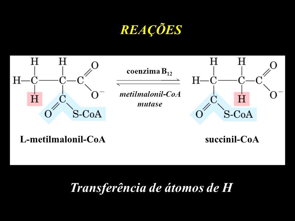 L-metilmalonil-CoAsuccinil-CoA metilmalonil-CoA mutase coenzima B 12 REAÇÕES Transferência de átomos de H